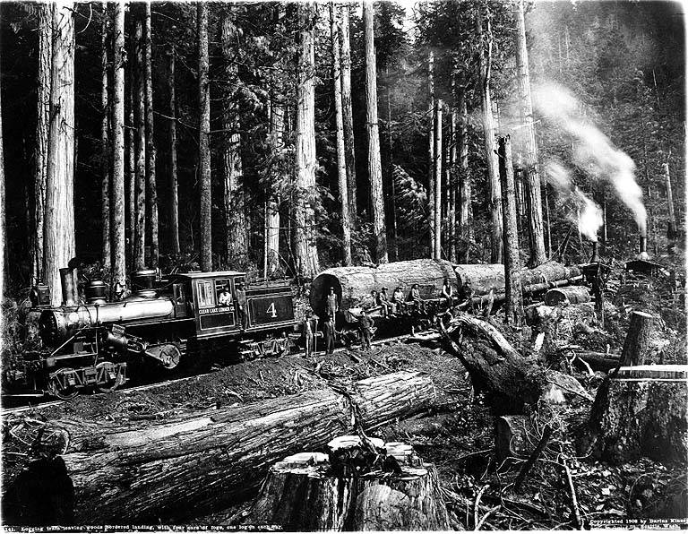 logging industry